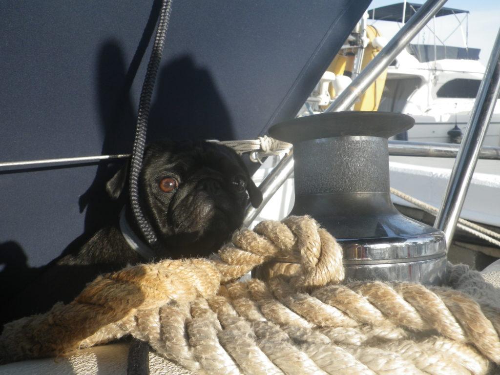 Dog sitting on rope