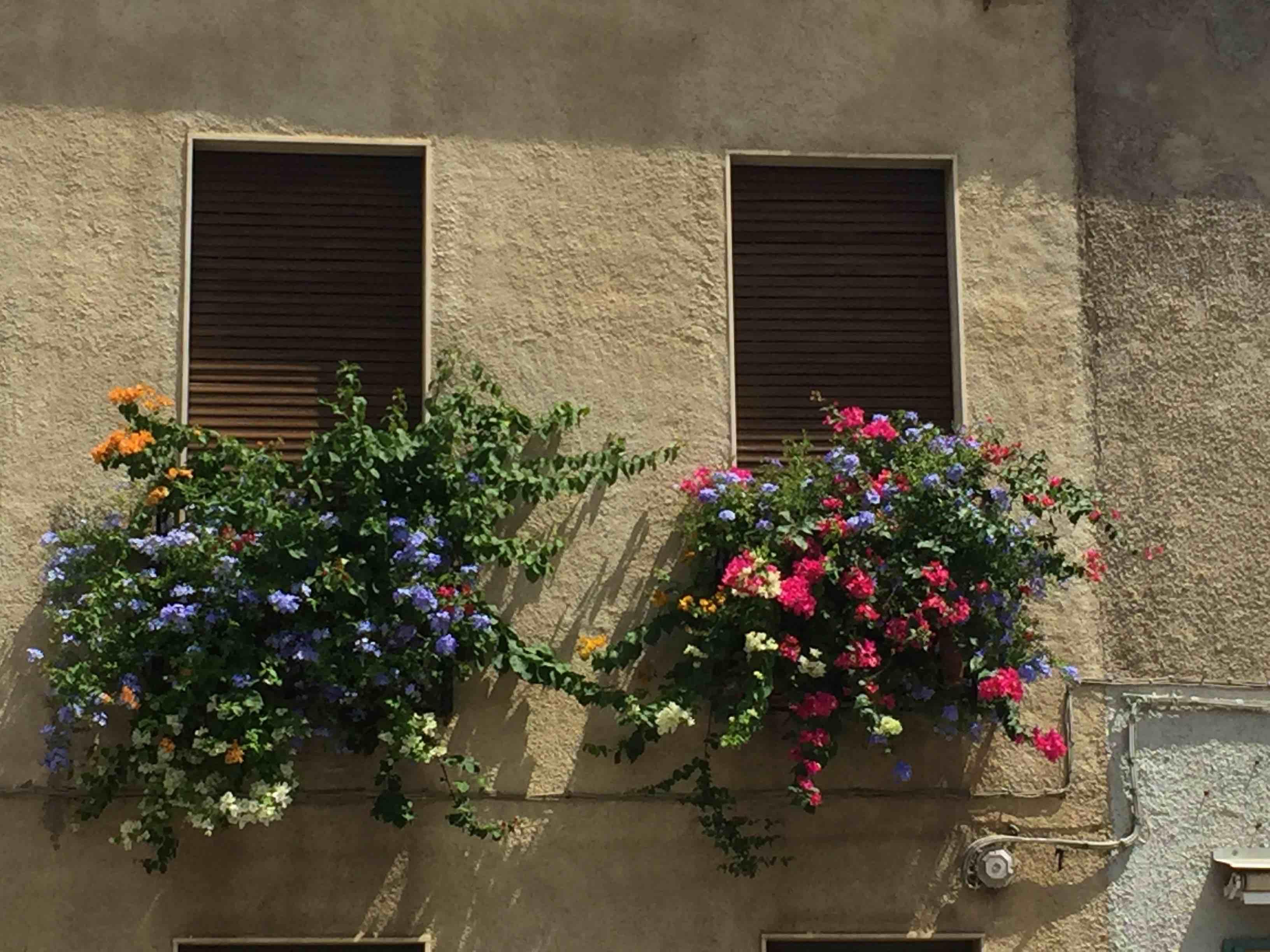 Villasimius - flowers